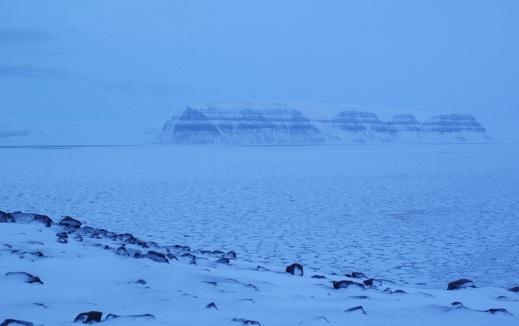 Iced fjord in dim light